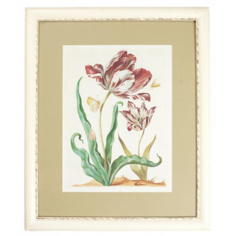Постер в раме Бабочка и тюльпан