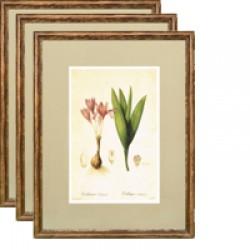 Авторские постеры студии А.Немоляевой, Ботанический Альбом