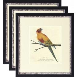 Постеры на стену серии Птицы