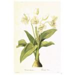 Постер в раме Ботанический альбом 23