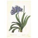 Постер в раме Ботанический альбом 28