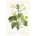 Постер в раме Ботанический альбом 29