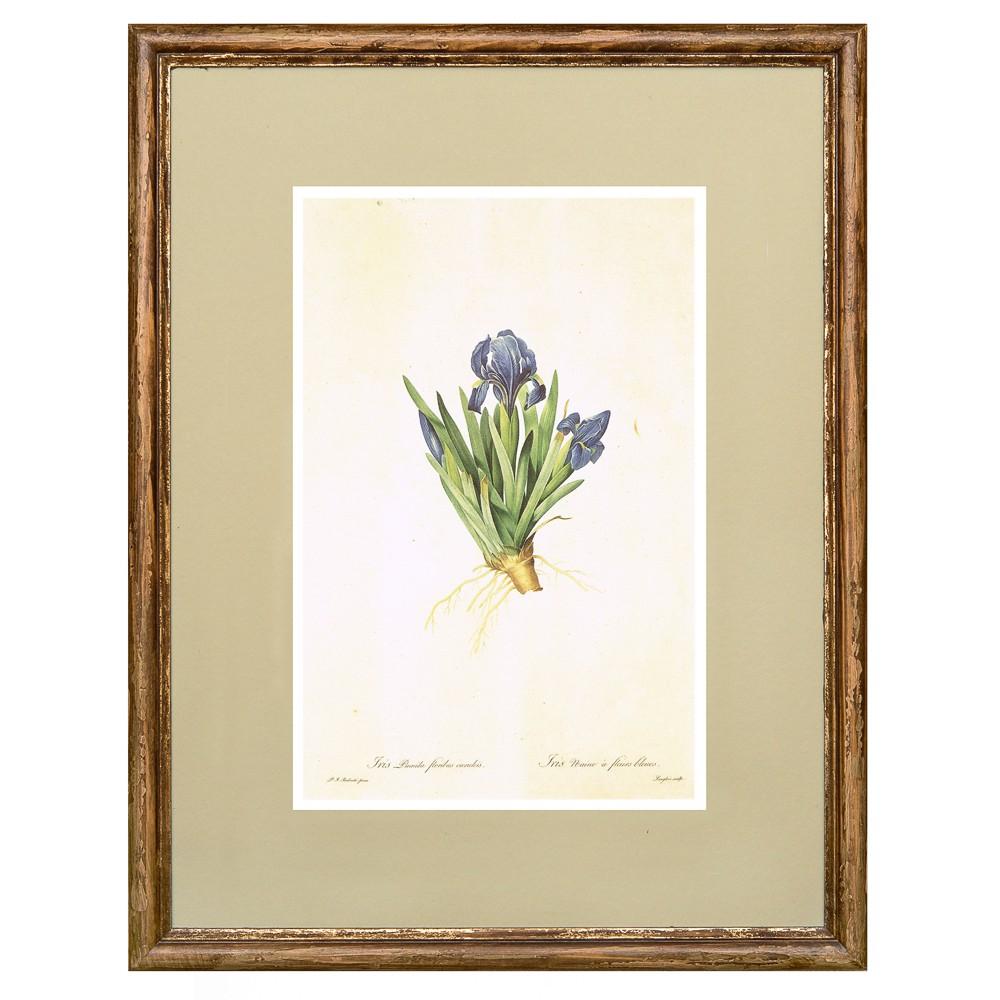 Постер в раме Ботанический альбом 10
