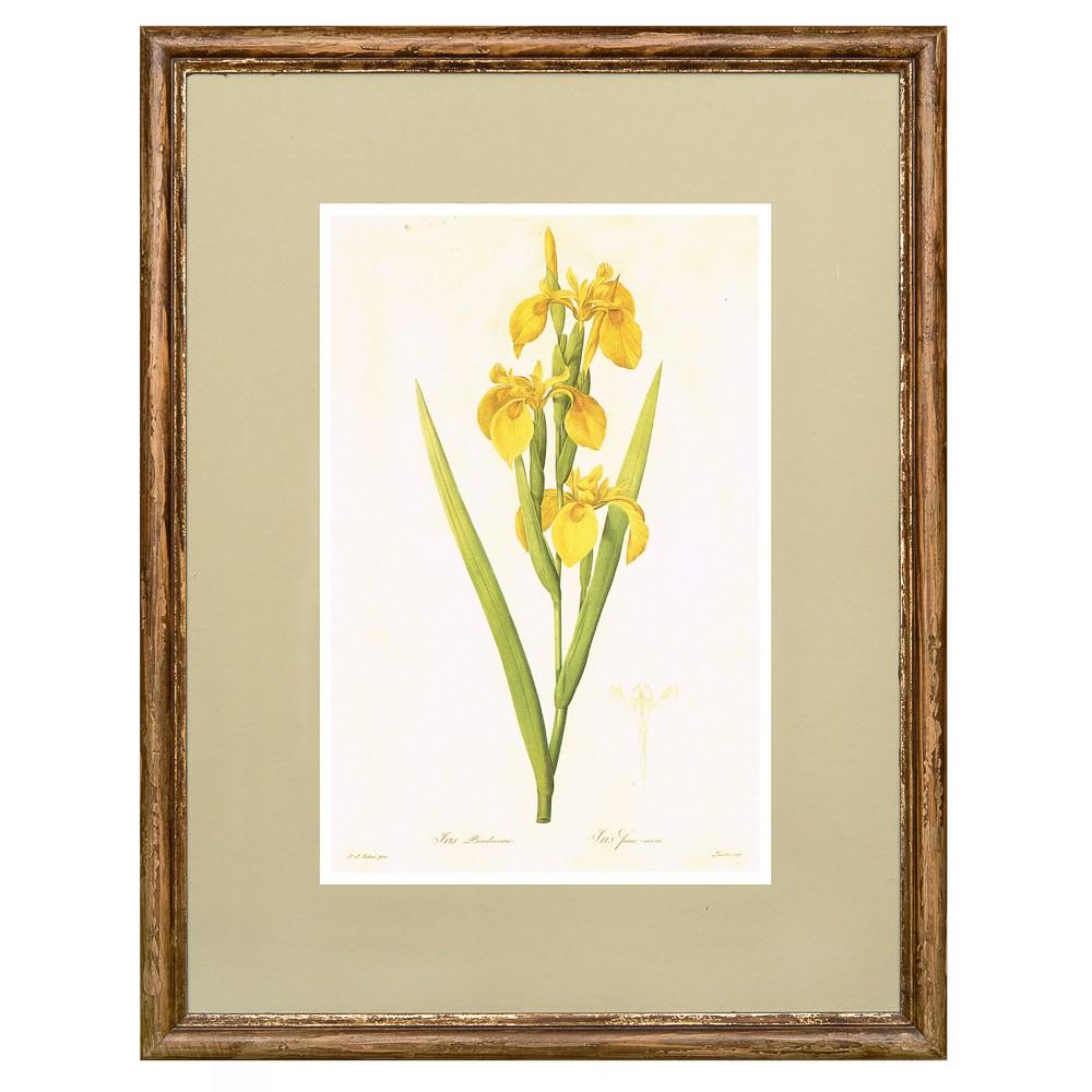 Постер в раме Ботанический альбом 11