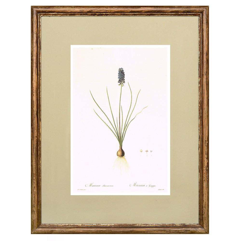 Постер в раме Ботанический альбом 12