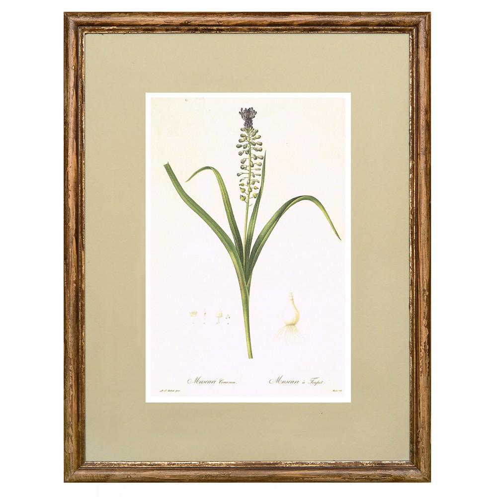 Постер в раме Ботанический альбом 13