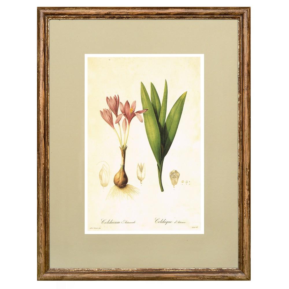 Постер в раме Ботанический альбом 14