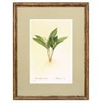 Постер в раме Ботанический альбом 15