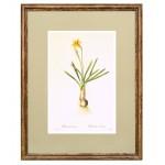 Постер в раме Ботанический альбом 18