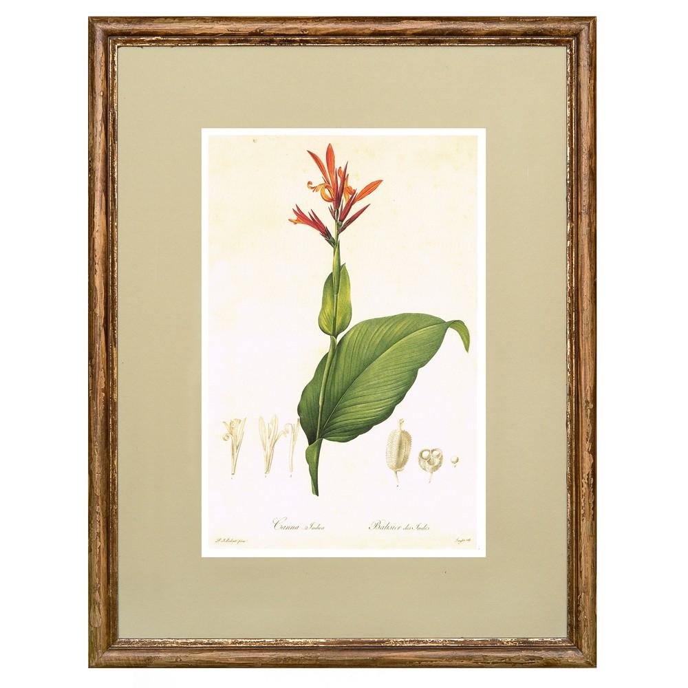 Постер в раме Ботанический альбом 27