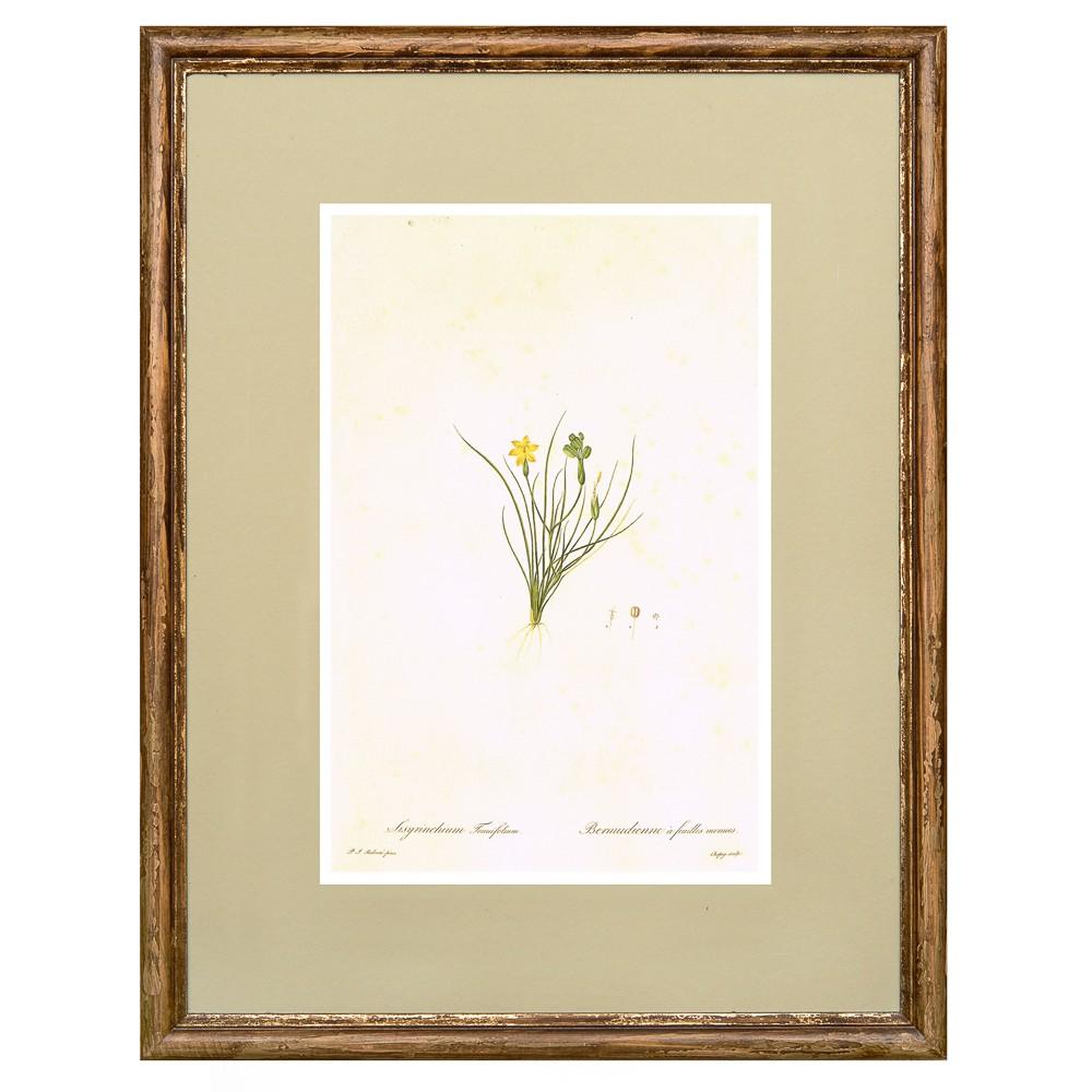 Постер в раме Ботанический альбом 03