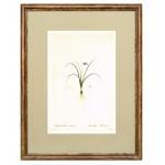 Постер в раме Ботанический альбом 31