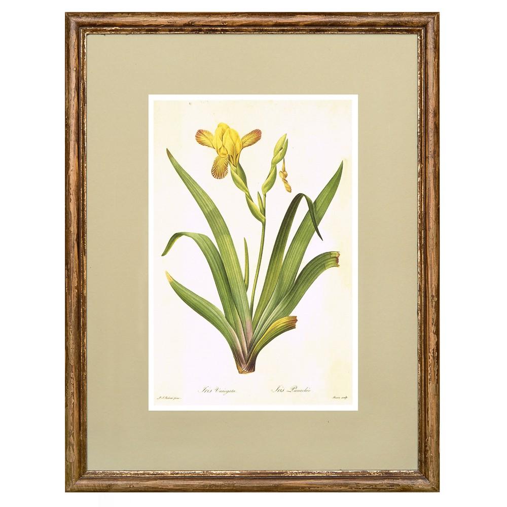Постер в раме Ботанический альбом 06