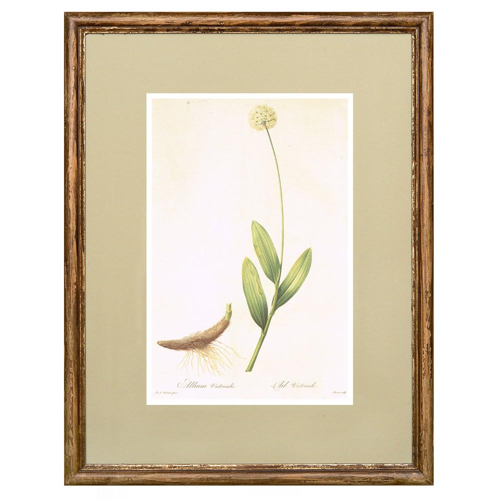 Постер в раме Ботанический альбом 08