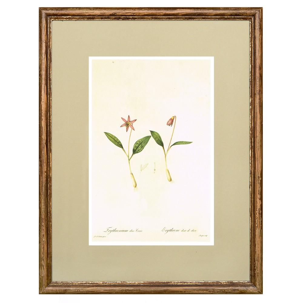 Постер в раме Ботанический альбом 02