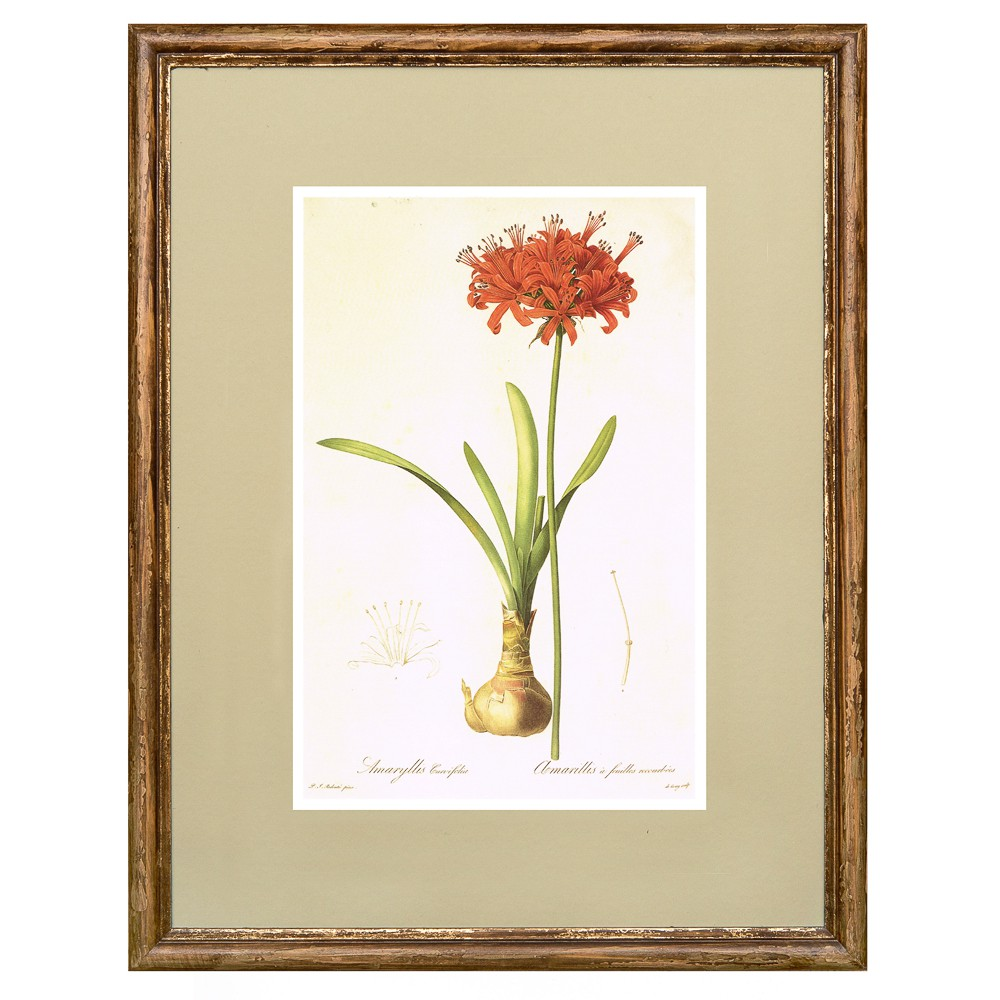 Постер в раме Ботанический альбом 04